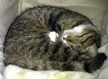 Fritz Sleeping