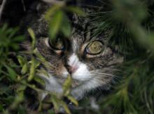 Frotz Peering Through Bushes