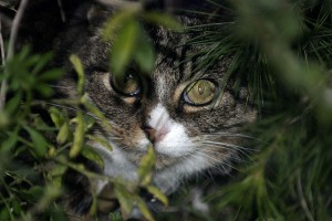 Fritz-in-Bushes