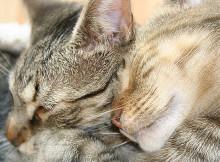 Mocha & Ripley Sleeping Together