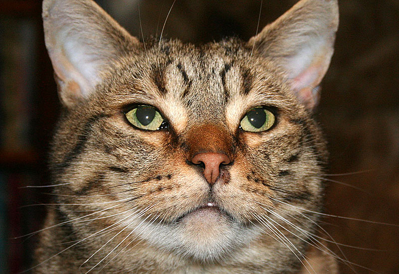 Ripley's Ringworm - Under His Nostril